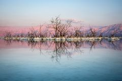 Dead Sea skeletons. The salty water of the dead sea has turned this trees into fossils Stock Images