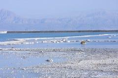 Dead sea textures. Salt mineral coating above dead sea Stock Photo