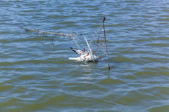 Dead seagull hit the fishing nets Royalty Free Stock Image