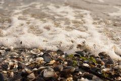 Dead seashells. On the beach Stock Photos