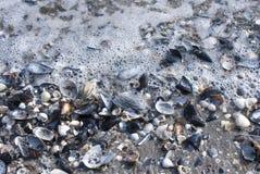 Dead seashells. On the beach Stock Photography