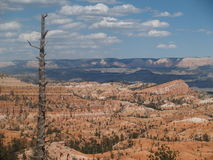 Dead Sentinel. The remnants of a long dead tree still stands guard over Bryce Canyon, Utah Royalty Free Stock Photo