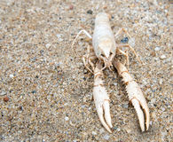Dead shrimp out into the wider Stock Images