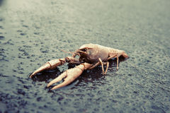 Dead shrimp out into the Stock Photos
