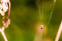 Dead small bug caught in spider web. Macro photography, close-up. Shot with shallow depth of field Stock Photos