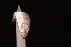 Dead small fish contorted on knife. Dead small fish contorted on blade of knife stock image