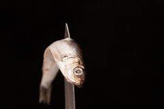Dead small fish contorted on knife. Dead small fish contorted on blade of knife royalty free stock image
