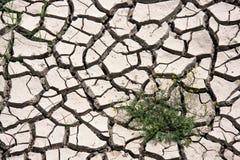 Dead soil Stock Image