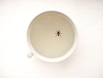 The dead Spider. Royalty Free Stock Images