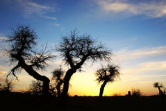 Dead standing tree with sunset glow Royalty Free Stock Photos