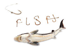 Dead sterlet and word F I S H composed of old rusty fish hooks. Isolated on white background Royalty Free Stock Photo