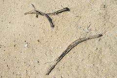 Dead sticks on sand background wallpaper Stock Images