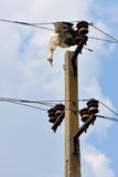 Dead stork  on electricity wires Royalty Free Stock Images