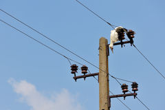 Dead stork  on electricity wires Stock Photos