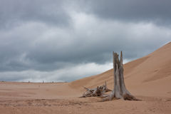 Dead Stump in the sand Stock Photography