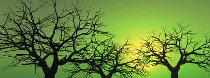 Dead_Sunset_Tree_AB Stock Images
