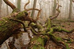 Dead Swamp Stock Photo