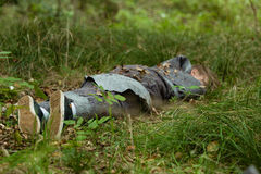 Dead teenager body in grass Royalty Free Stock Photos