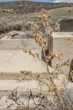 Dead Thistle Plant Stock Photo