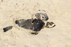 Dead tortoise Stock Photos