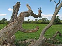 Dead Tree 1. Fallen dead tree in a field Stock Photos