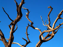 Dead tree 1 Stock Photos