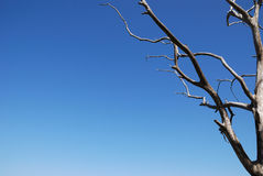Dead tree. Branches of dead lone tree in a blue sky Royalty Free Stock Photo