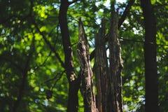 Dead tree stock image