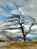 Dead tree. A dead tree against mountain background Royalty Free Stock Photos
