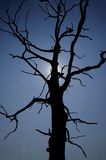 Dead Tree. In the National Reserve Bile Karpaty (White Carpats) in southern part of Moravia, Czech Republic Stock Photo