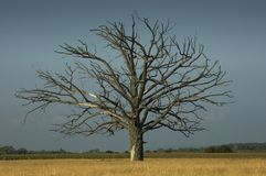 Dead tree Stock Images
