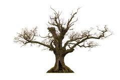 Free Dead Tree Royalty Free Stock Photography - 13567227