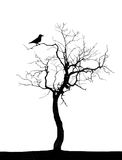 Dead  tree. Dead tree with a black raven Royalty Free Stock Images