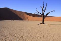 Dead Tree Stock Photo