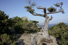 Dead tree. Mountain clouds sky blue rock forest dead tree sea coast blue Royalty Free Stock Images