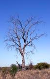 Dead tree Royalty Free Stock Photo