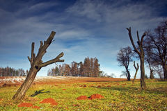 Dead tree. Landcape with a dead tree stock images