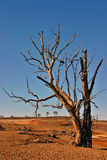 Dead Tree. In desolate enviroment Royalty Free Stock Photo