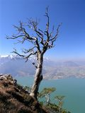 Dead tree. Above the mountain lake Stock Photo