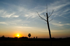 Dead tree. Without leaf in blue sky Stock Image