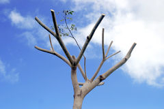 Dead Tree. Tree with branches cut off Royalty Free Stock Photos