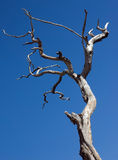 Dead tree. Sad view of a dead tree against an empty cloud sky Stock Photo