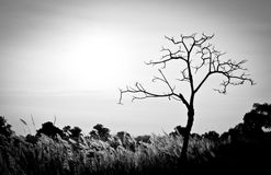 Dead tree. Black and white Stock Photography