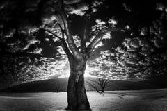 Dead tree. In Dead Vlei - Sossusvlei, Namib Desert, Namibia in black and white Stock Image