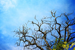 Dead Tree Royalty Free Stock Photos