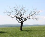 Dead tree. Summer landscape with dead tree Stock Image