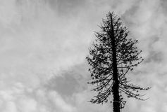 Dead Tree. Black and White Alone Dead Tree Royalty Free Stock Photo