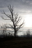 Dead tree. Bleak landscape with dead tree at sunset Stock Photos