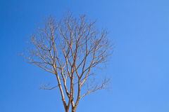Dead of tree Royalty Free Stock Image