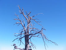 Dead Tree Royalty Free Stock Images